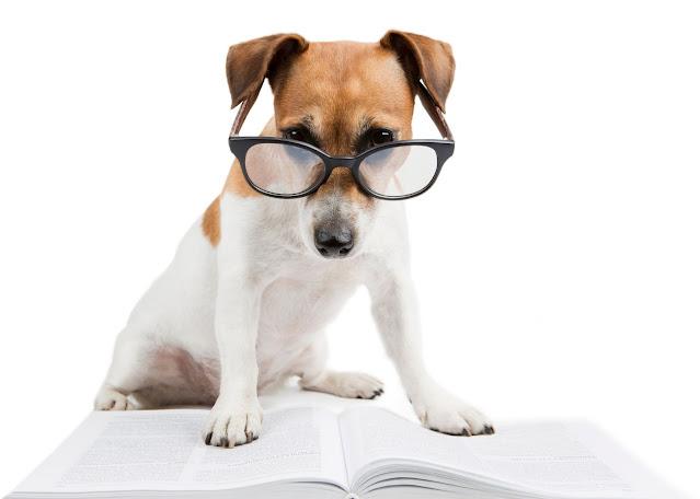 cachorro lendo um livro