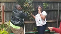 ids - Shock as RAILA's wife, IDA ODINGA, is caught on tape red-handed stealing her neighbours fruits with another man-Is this the Canaan that RAILA promised us? Look! (Video)