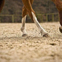 8 tips to keep your horse's feet healthy between farrier visits