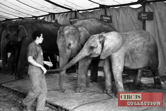 éléphants d'aise et d'Afrique du Cirque National Suisse Knie  1970
