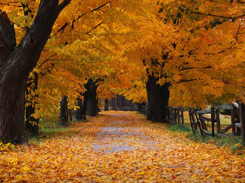 Free Animated Fall Wallpaper Autumn Xp Background Autumn Weddings Pics