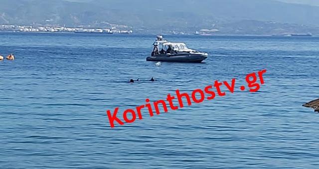 Τραγωδία: Εντοπίσθηκε νεκρός ο ψαροντουφεκάς που αγνοούνταν στην Κορινθία