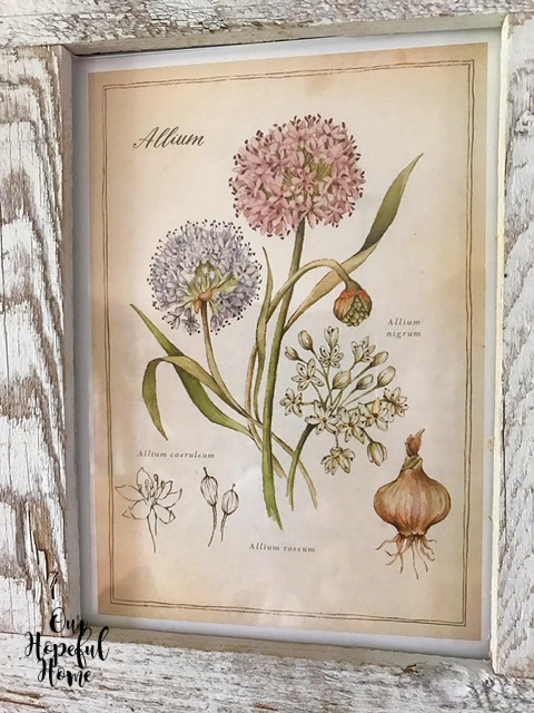 allium garlic flower bulb spring planting botanical frame