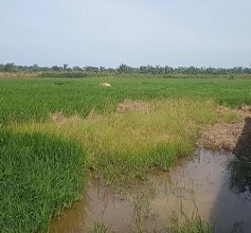 TANAH DIJUAL: tanah murah dan luas 13 Ha di daerah - Pantai Labu -Deliserdang <del>Rp 250.000,-</del> <price>Rp 150.000,-/Meter</price> <code>PLABU</code>