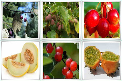 Fruit Names That Start With H