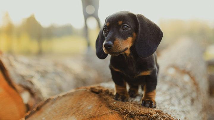 puppy-socialization-checklist