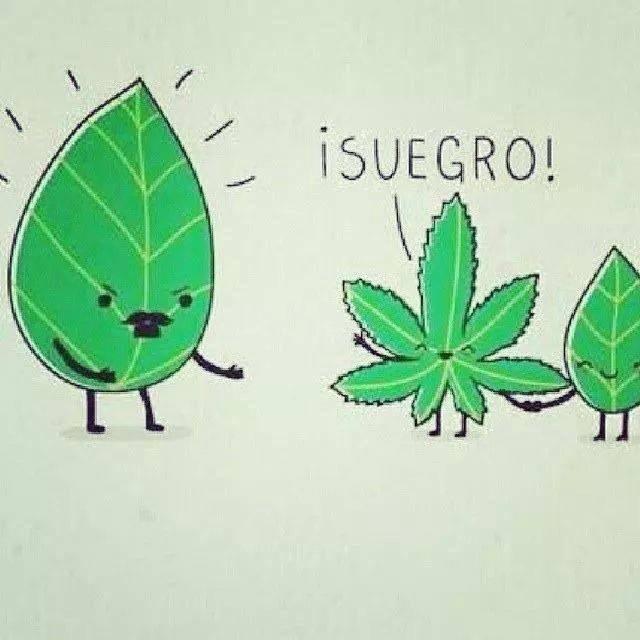 Hola Suegro
