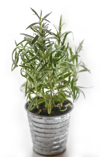 Planta de Tomillo para la tos seca