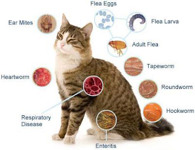 kucing terkena penyakit cacingan