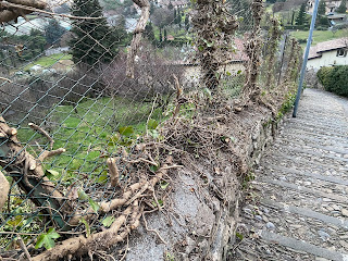 "When ivy is ugly, it's really ugly like this ""trimmed"" ivy on Via Fontanabrolo."