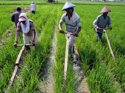 Mengembangkan Sektor Pertanian Untuk Bersaing Di Era Global