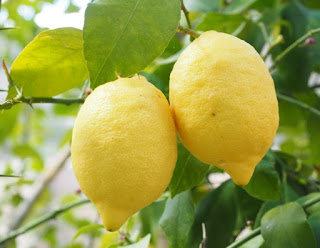 Most citrus groves in Egypt are located the North of the African country.