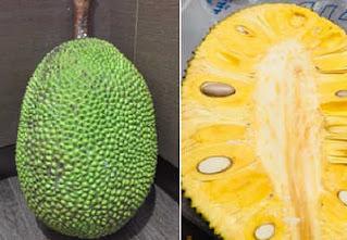 ต้นขนุนพันธุ์ชนาธิป ขนุนพันธุ์ใหม่ เนื้อสีเหลือง ให้ผลเร็ว