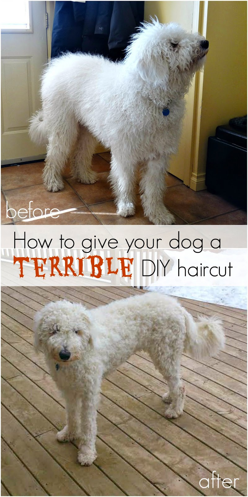 how to give your dog a terrible haircut | dans le lakehouse