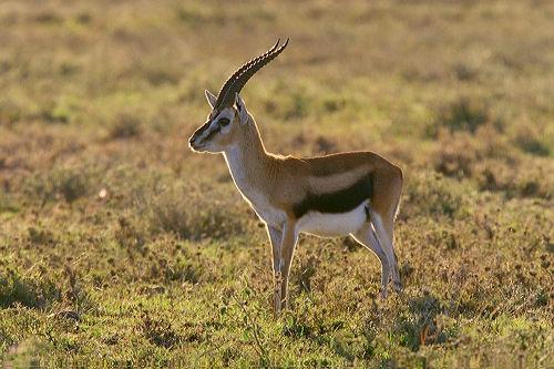 Finding Neverland Blog: Top 10 Fastest Animals