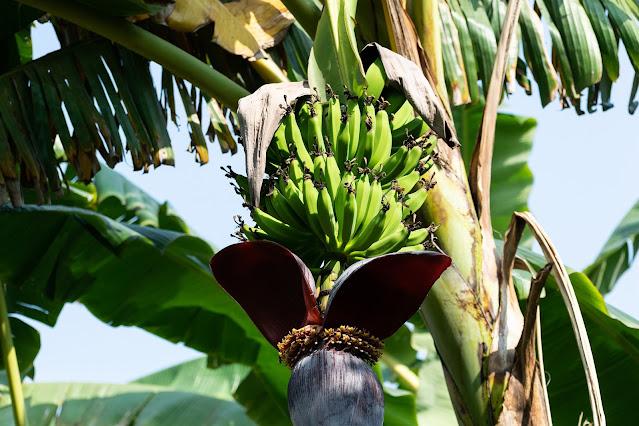 banana 6024164 1920