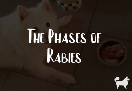 The Phases of Rabies