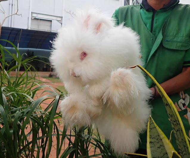 bermain bersama kelinci di mall kelapa gading