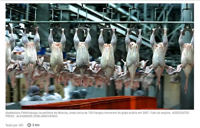 Rússia anuncia sete casos de transmissão da cepa H5N8 de gripe aviária a humanos