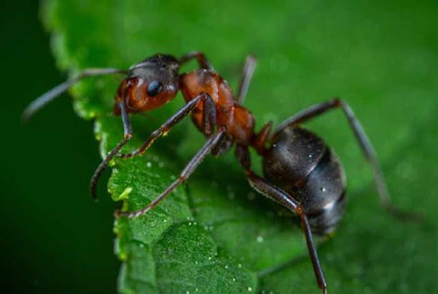 essay on ant