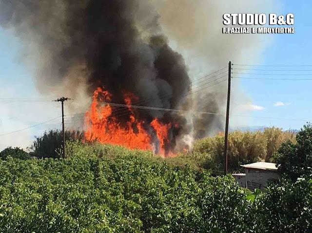 Δυνατοί άνεμοι και ζέστη - Επικίνδυνος συνδυασμός για εκδήλωση πυρκαγιάς