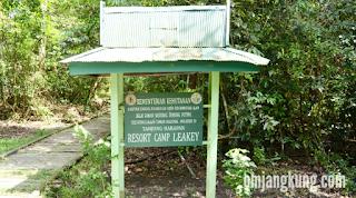 tanjung puting national park orangutan kalimantan tengah