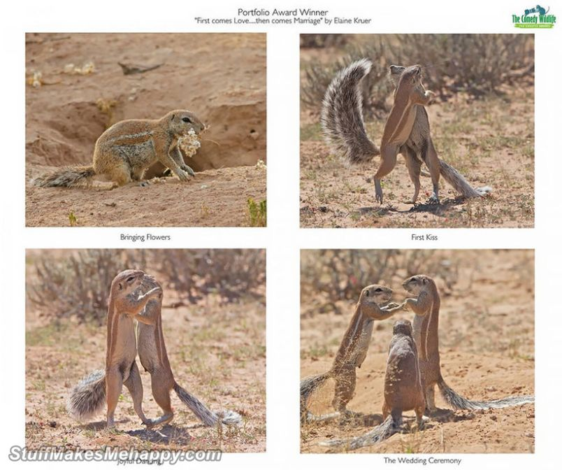 Comedy Wildlife Photography Awards 2019 Contest Winners - Funny Animal Pictures