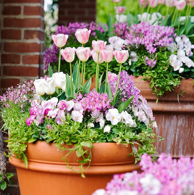 Mix flower in container garden