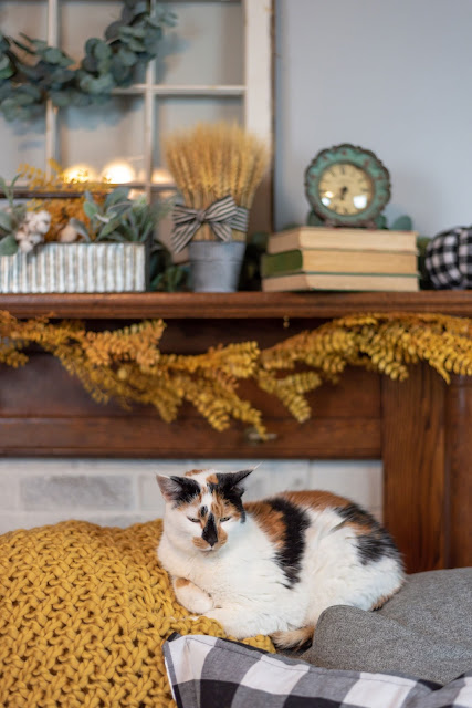 Companion Animal Psychology turns 8; calico cat relaxes indoors
