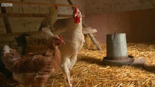 Rachel Allen chicken