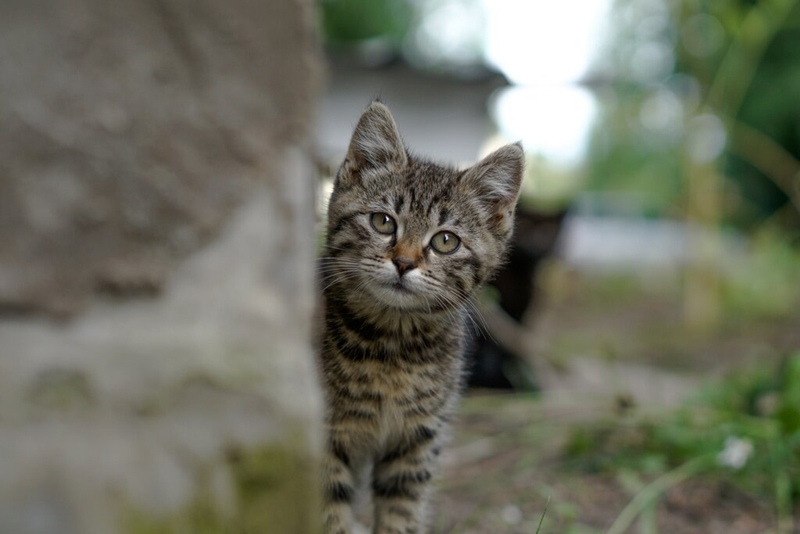 Sokak hayvanlarına yardım etmenin 7 yolu