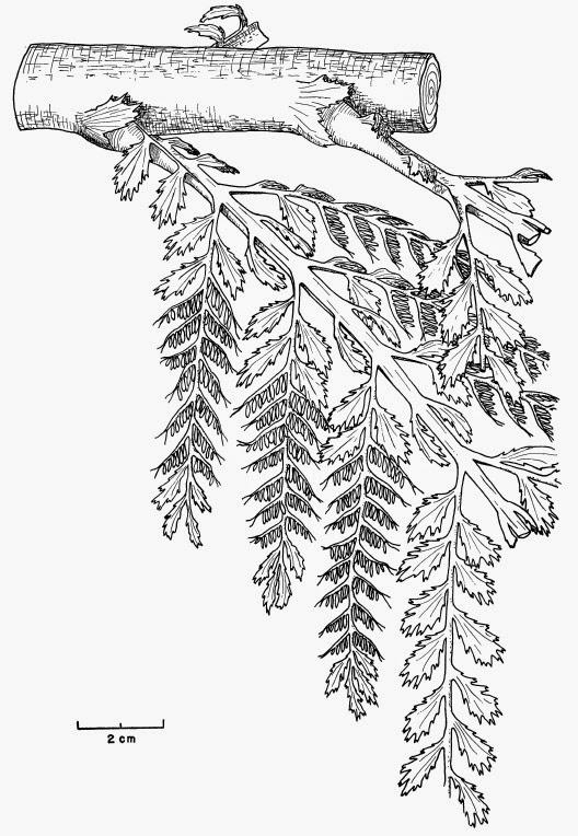 Catalogue Of Organisms The Urbaum
