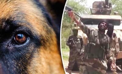 dogs attack boko haram suicide bombers borno state