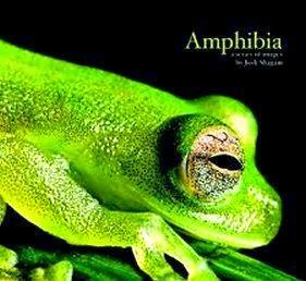 Amphibia Pengertian Ciri Ciri Klasifikasi Dan Peranannya