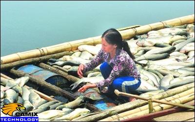 Cải tạo đạt quy chuẩn công trình xử lý nước thải - 'Thủ phạm' gây chết cá sông Bưởi