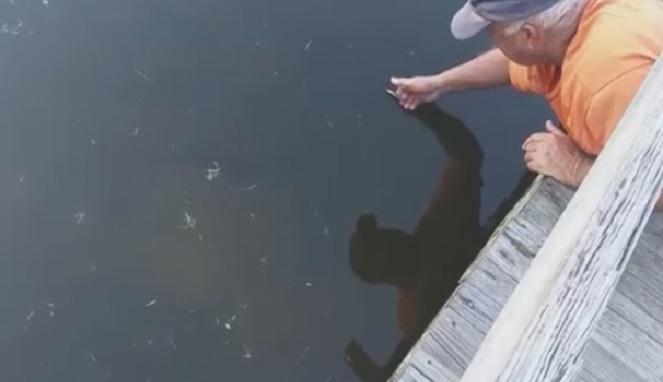 Hanya Menggunakan Tangan, Pria Ini Berhasil Menangkap Ikan Besar