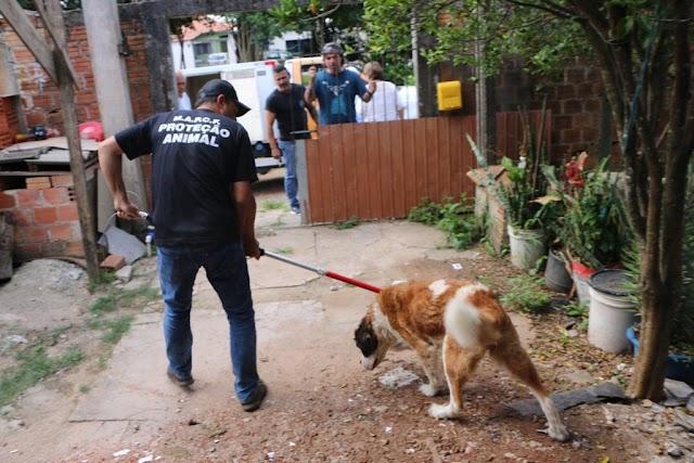Cães em situação de maus-tratos são resgatados em Curitiba