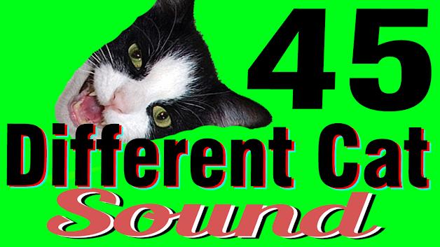 Cat Sound Effect no Copyright