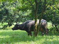 Wahana D'Farm dan Kawasan Wisata Pertanian Terpadu Damandiri, Wahana Keluarga di  Wisata Taman Buah Mekarsari