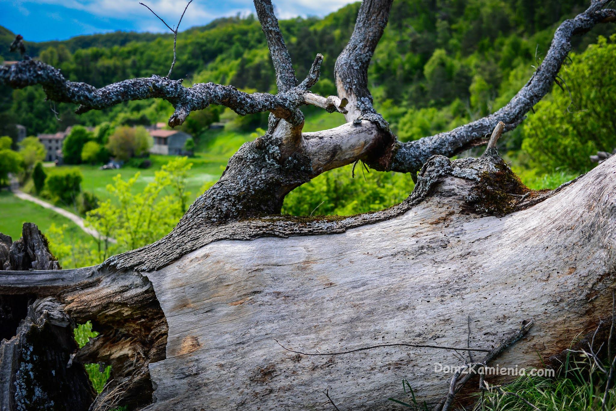 Dom z Kamienia, Gamberaldi, blog o życiu w Toskanii