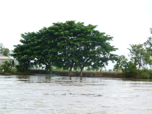 La vida a orillas del Mekong en Camboya