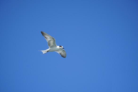 chim hải âu chụp gần