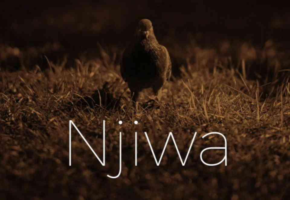Lady Jaydee ~ Njiwa