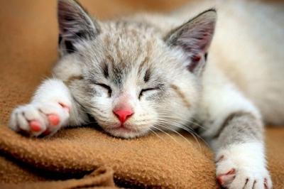 Faktor Penyebab Kucing Sering Diare (Mencret) dan Bagaimana Cara Mengatasinya