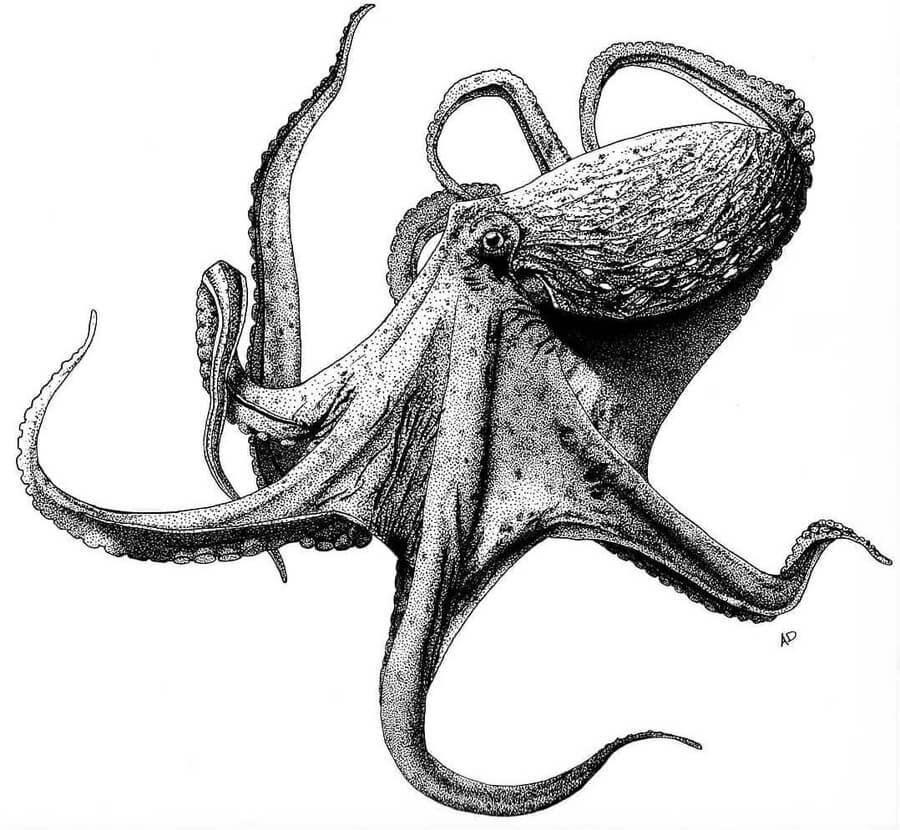 07-Smart-octopus-Ashley-Habernal-www-designstack-co