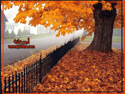 اليوم آخر أيام الصيف وبداية الخريف غداً