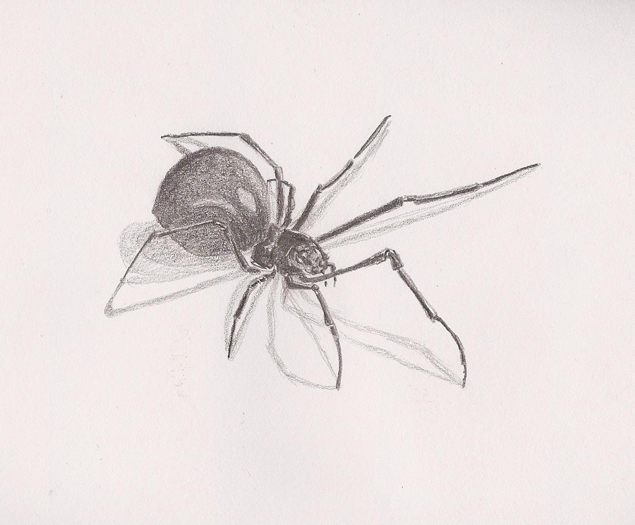Сделать открытку, рисунок с пауками
