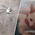 (Video) 'Apalah dosa kucing ni, sampai kau aniaya dia begini'