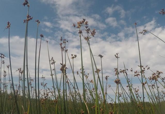 Kasvit kurkottavat taivasta kohti
