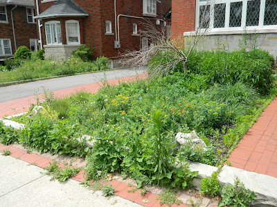Toronto Midtown Front Garden Cleanup Before by Paul Jung Gardening Services Inc.--a Toronto Gardening Company